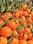 Clementinele te ajută să nu răceşti şi să nu te îngraşi